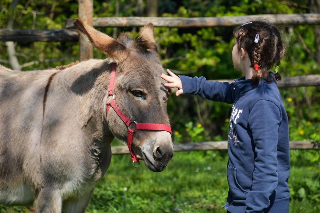 A dorso d'asino - Fiera Cavalli a Roma 2020